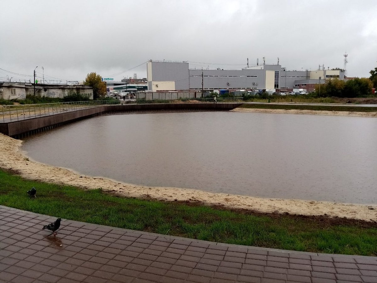 Мухинское озеро покрылось водорослями из-за нарушенного биобаланса — администрация Бора - фото 1