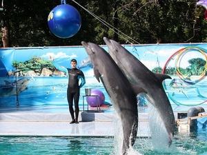 Нижегородский дельфинарий бесплатно посетят более 300 детей
