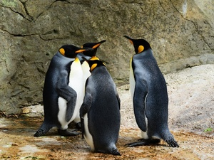 Пингвинарий планируется открыть в Нижнем Новгороде в 2019 году
