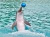 Дельфинарий возобновил работу в Нижнем Новгороде