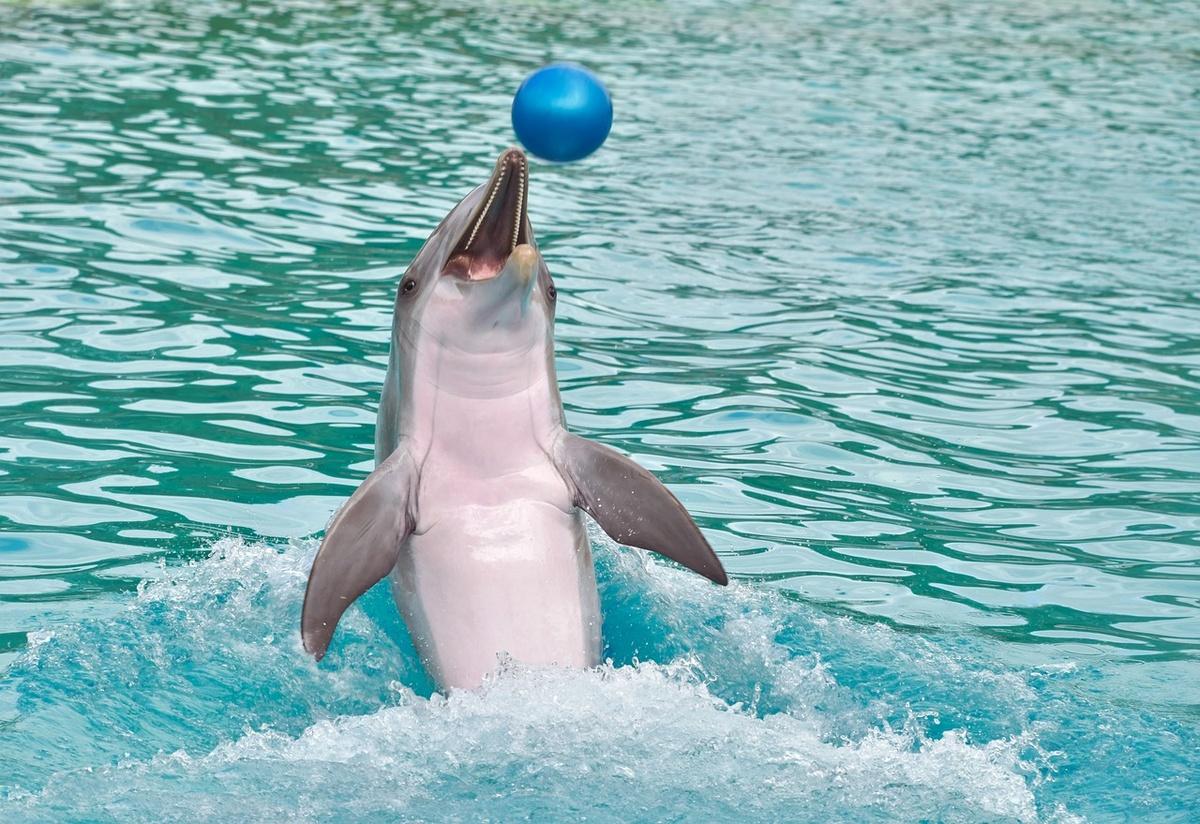Дельфинарии возобновили работу в Нижегородской области - фото 1