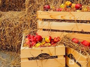 Яблоки, лук и яйца подешевели в Нижегородской области