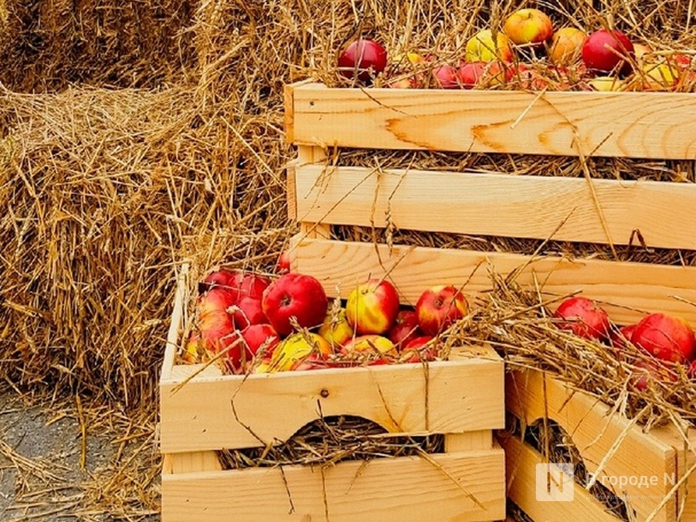 Яблоки, лук и яйца подешевели в Нижегородской области - фото 1