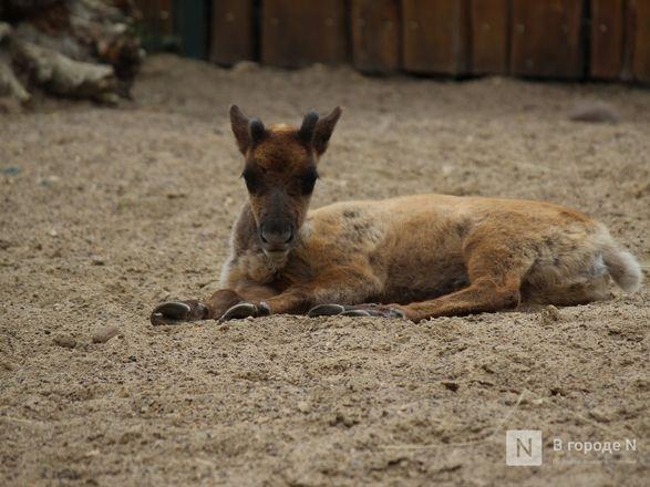Выжить в пандемию: что происходило в закрытом зоопарке «Лимпопо» - фото 62