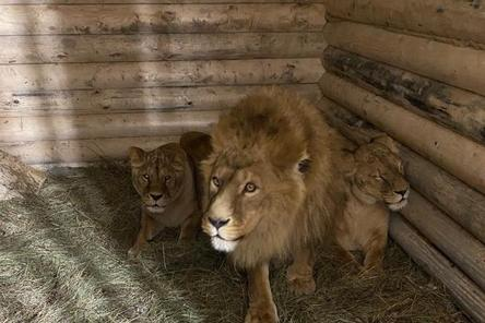 Последние животные переехали из бывшего зоопарка в парке «Швейцария»