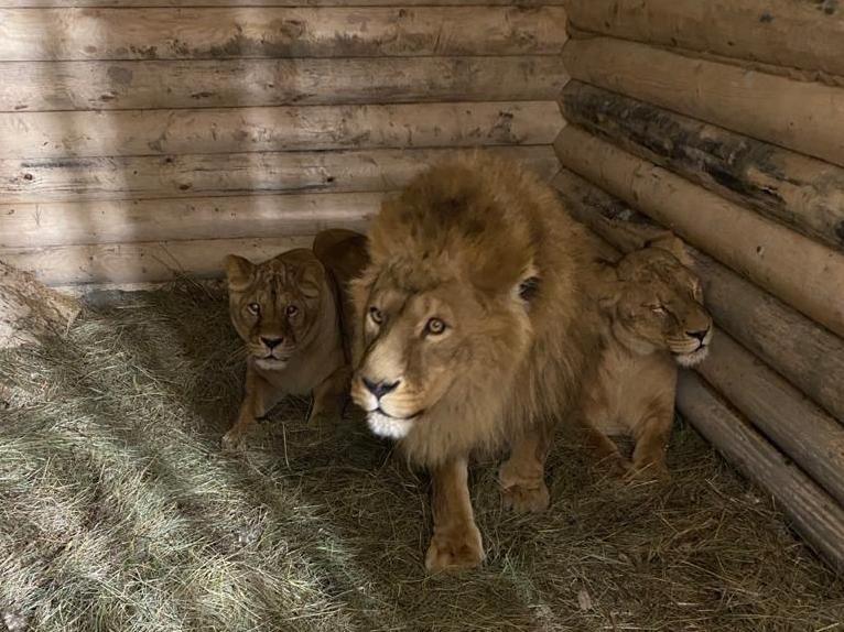 Последние животные переехали из бывшего зоопарка в парке «Швейцария» - фото 1
