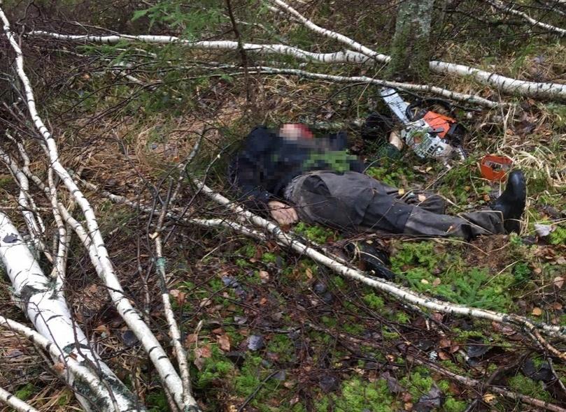 Заготовщик древесины погиб в Навашинском лесничестве от упавшей на него березы - фото 1