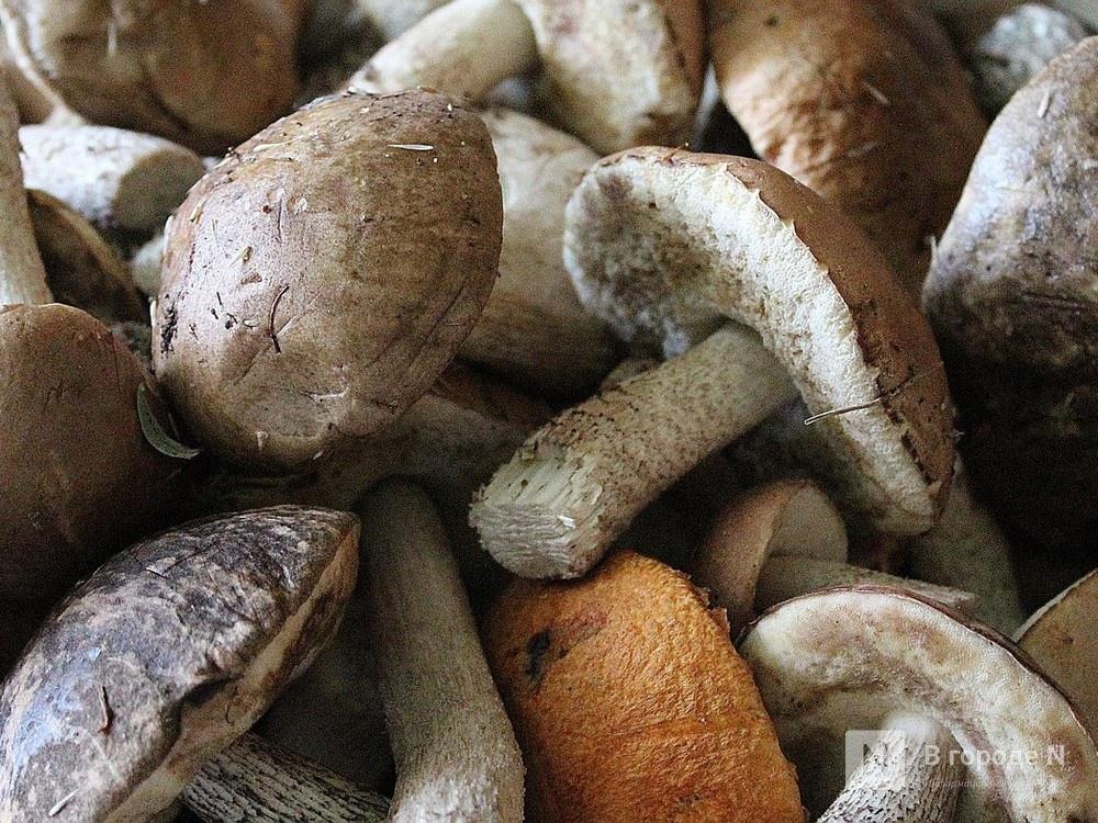 13 нижегородцев отравились грибами с начала 2020 года: один из пострадавших умер - фото 1