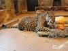 До миллиона рублей в месяц на корм для животных будут получать нижегородские зоопарки