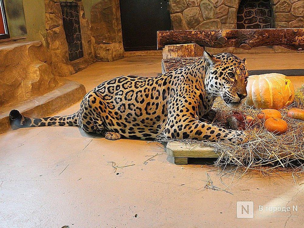 До миллиона рублей в месяц на корм для животных будут получать нижегородские зоопарки - фото 1