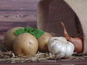 Как выбирать картофель: инструкция для покупателей