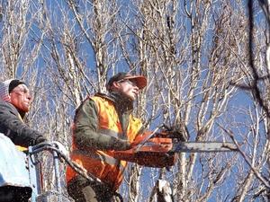 Дорожную карту по сносу аварийных деревьев предложили создать в Нижнем Новгороде