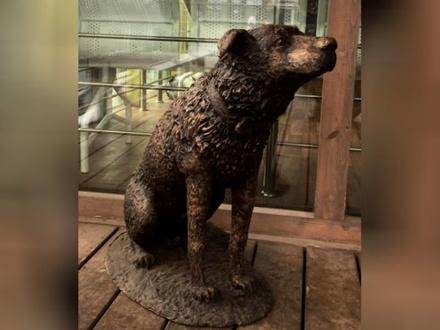 Памятник бездомному псу появился в Нижнем Новгороде