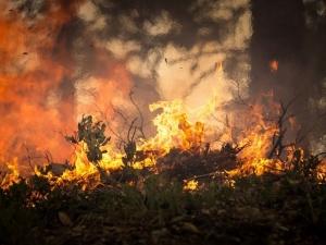 Нижегородские депутаты хотят разрешить вырубать деревья для предотвращения пожаров