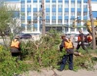Администрацию Нижегородского района обязали восстановить вырубленные деревья в сквере им. Горького