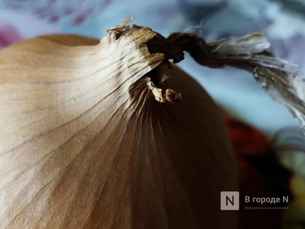 На 7% подешевел лук в Нижегородской области - фото 1