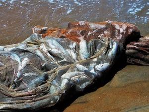 Из сетей воскресенских браконьеров спасли 17 кг живой рыбы